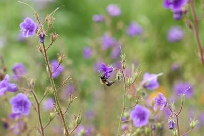 Bienenfreund