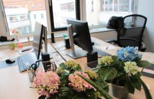pflegeleichte Büropflanzen