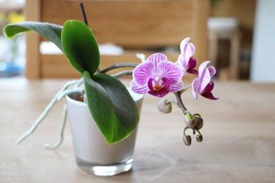 beliebte Zimmerpflanzen