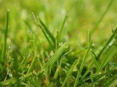 nassen Rasen mähen