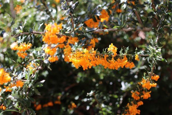 blühende Heckenpflanzen