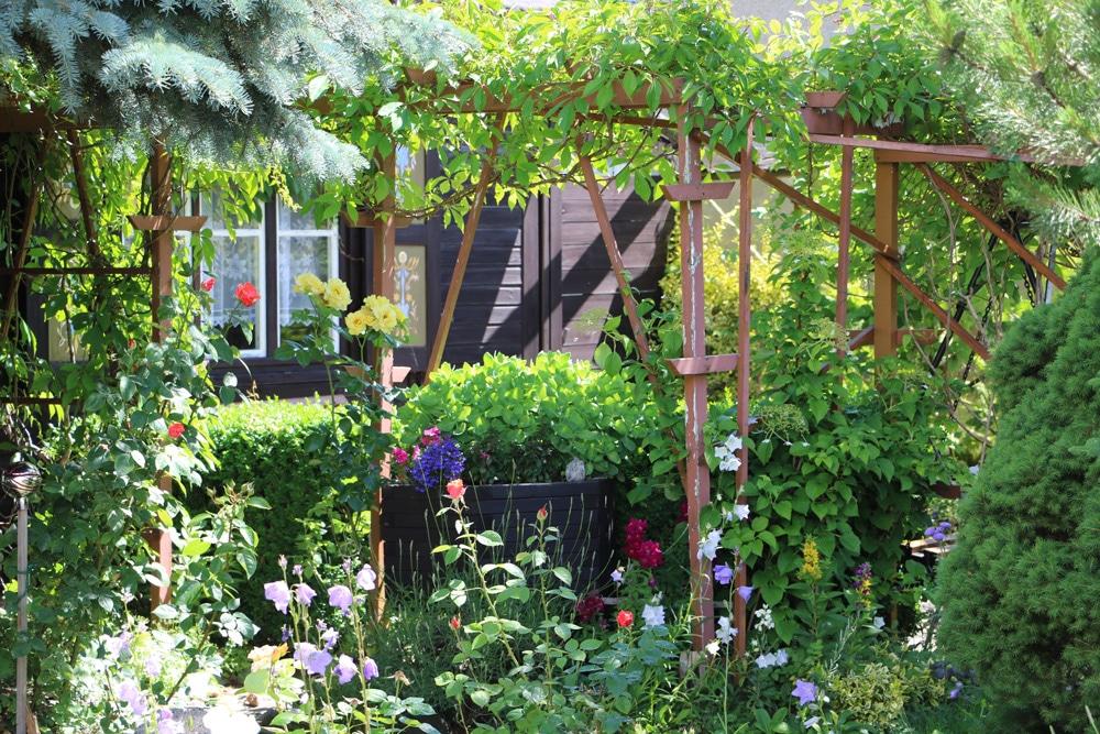 Pergola Bepflanzen 10 Bluhende Und Rankende Mehrjahrige Pflanzen