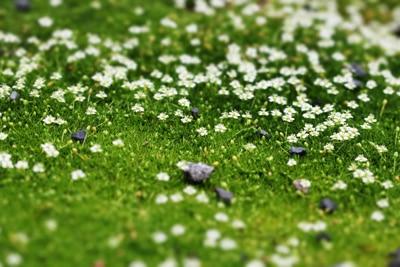 Sternmoos, Flaschengarten Pflanzen