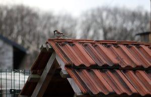 Vögel unterm Dach