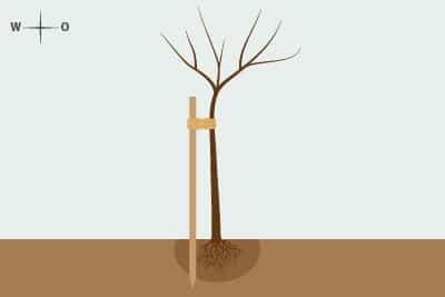 senkrechter Pfahl Baum anbinden