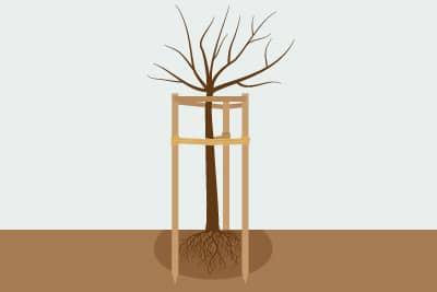 Baum anbinden Dreibock