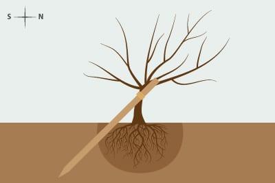 Baum anbinden schräger Pfahl