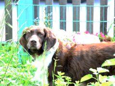 Hund pinkelt an Haustür