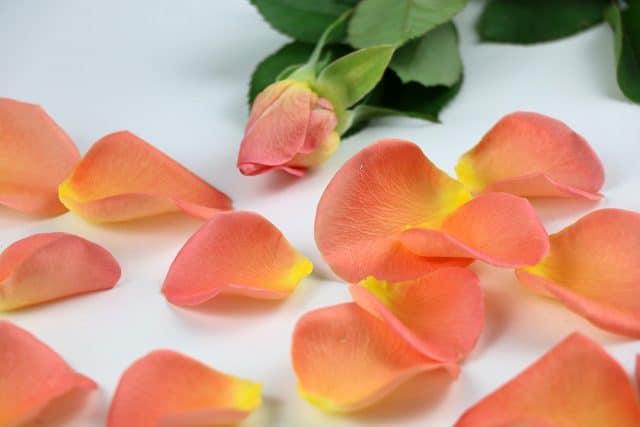 Rosenblätter trocknen