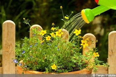 Blumen gießen Staunässe