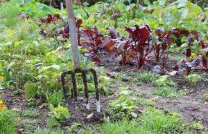 Fruchtfolge Gemüsegarten