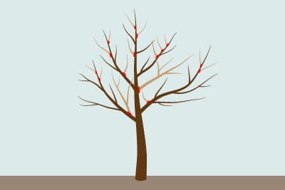 Pflaumenbaum schneiden Erhaltungsschnitt