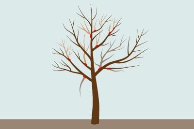 Pflaumenbaum schneiden Verjüngungsschnitt