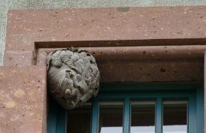 Wespen Nest verlassen