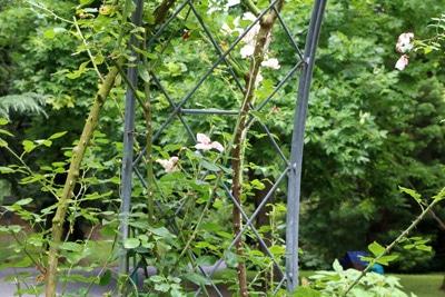Kletterrosen Rosengarten
