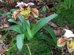 Orchideen blühen