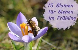 Blumen Bienen Frühling