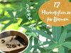 Bienen Herbstpflanzen