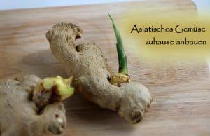 Ingwer Asiatisches Gemüse