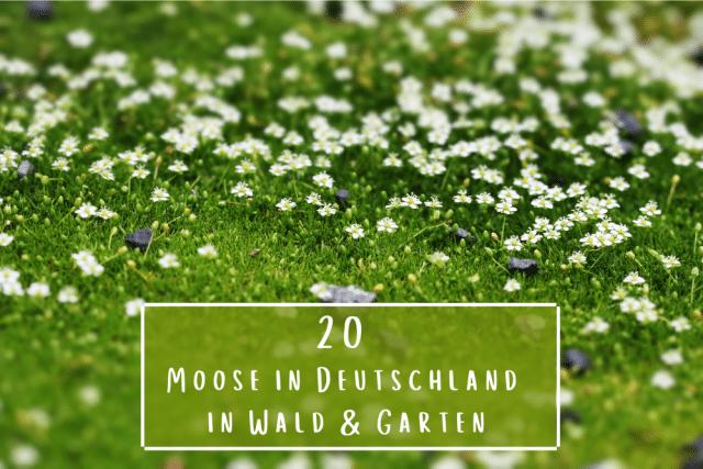 Moose in Deutschland
