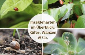 Insektenarten in Deutschland