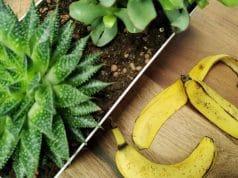 Bananenschalen als Dünger