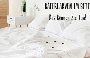Käfer Larven im Bett