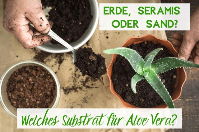 Aloe Vera Substrat