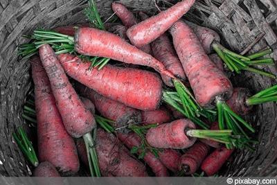 Nutri Red Karotten