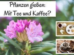 Pflanzen gießen Tee Kaffee
