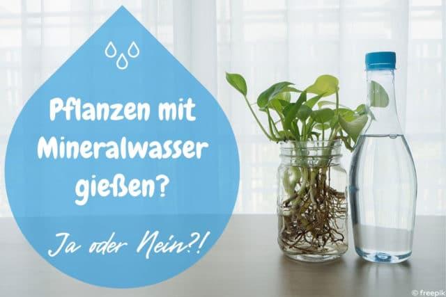 Pflanzen gießen Mineralwasser