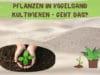 Vogelsand für Pflanzen