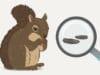 Eichhörnchen-Kot erkennen