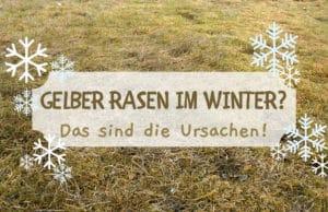 Gelber Rasen im Winter