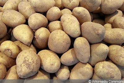 Cilena, Kartoffelsorte