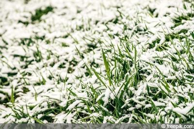 Rasen Winter Schnee