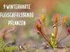 winterharte fleischfressende Pflanzen