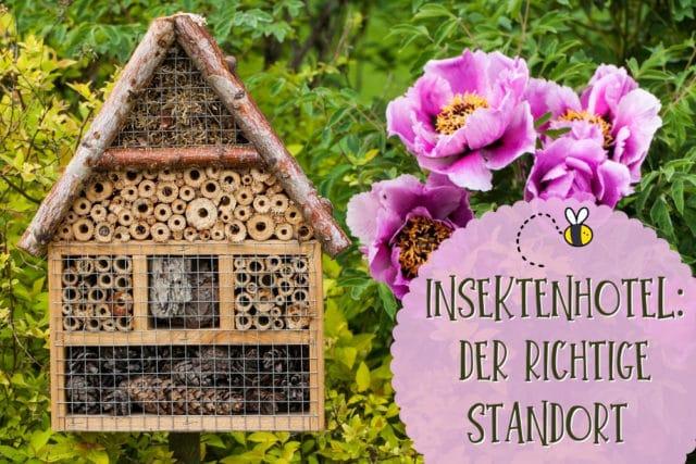 Insektenhotel-Standort