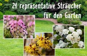 Repräsentative Sträucher für den Garten