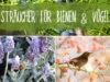 Sträucher für Bienen und Vögel