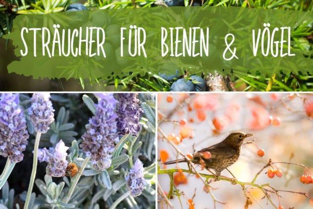 Sträucher Für Vögel Und Insekten