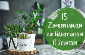 Zimmerpflanzen für Halbschatten und Schatten
