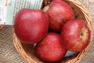 Roter Eiserapfel, Apfel, Apfelernte
