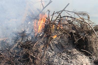 Gartenabfall verbrennen, Feuer