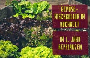 Gemüse-Mischkultur im Hochbeet: im 1. Jahr bepflanzen