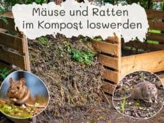 Mäuse & Ratten im Kompost