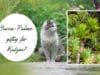 Yucca-Palme giftig für Katzen