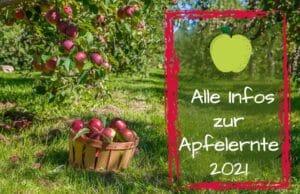 Apfelernte 2021