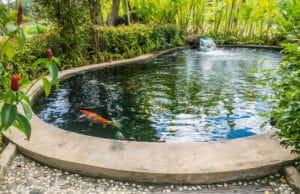 Fische, Teich, Laichzeit