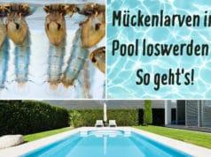 Mückenlarven im Pool loswerden